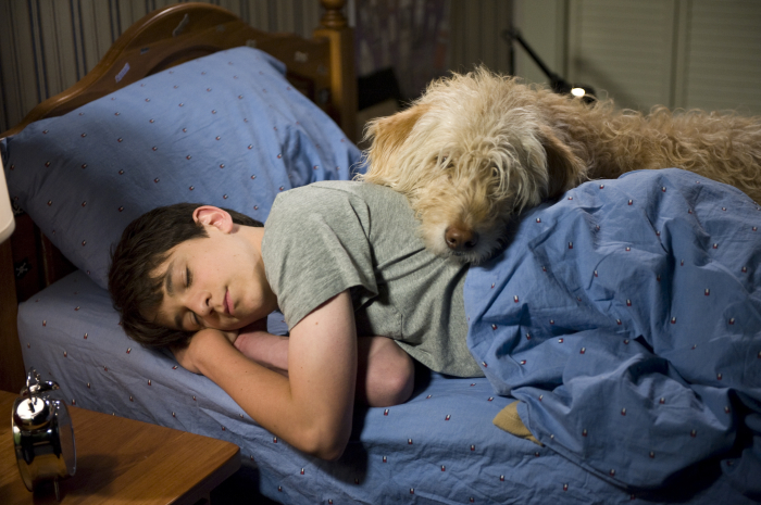 Diary Of A Wimpy Kid Dog Days The Steel Frog Blog